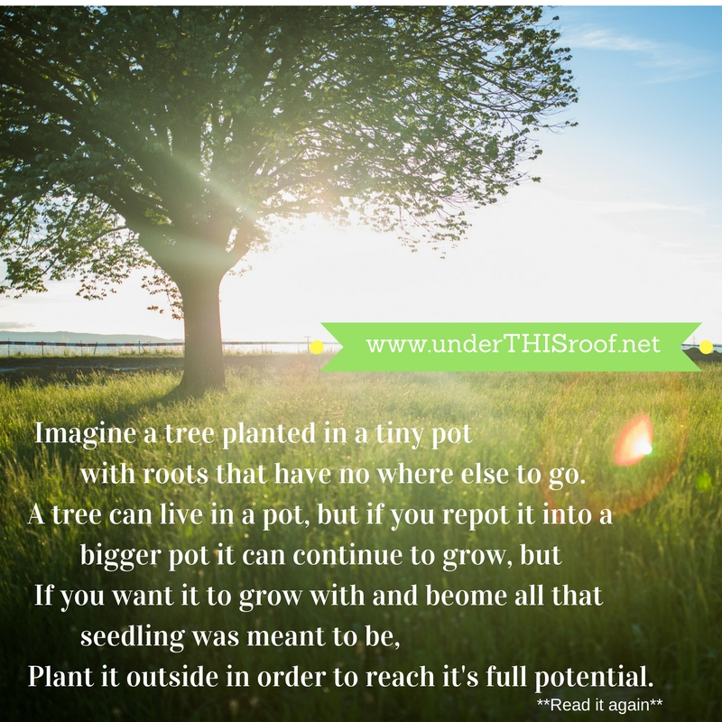 I Was feeling like a tree planted in a tiny pot with roots that had no where else to doYou can keep a tree in a pot and you can repot it into a bigger pot so it can continue to grow, but